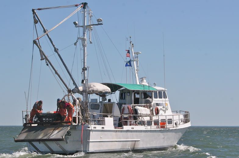 Winter Blue Crab Dredge Survey