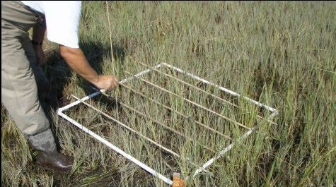 Biomonitoring in the marsh