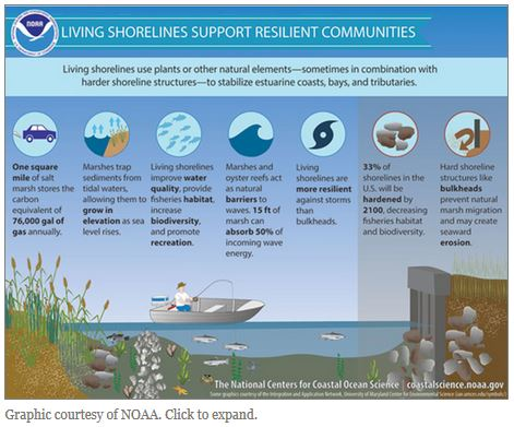 Ensia LIving Shorelines Article