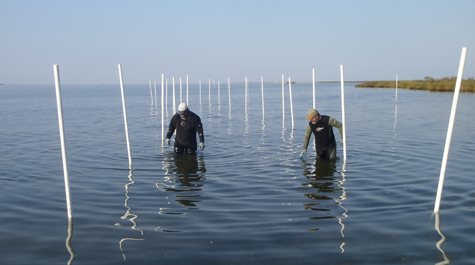 Oyster Reef Research