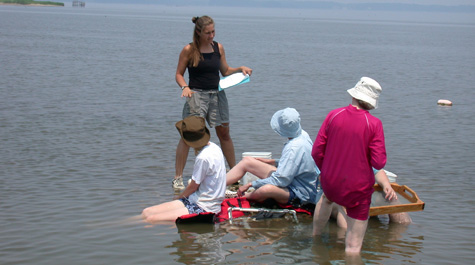 Schools Restoring Oysters for the Chesapeake
