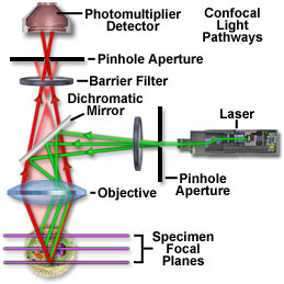 A confocal microscope uses point-by-point illumination to construct extremely high-resolution images.