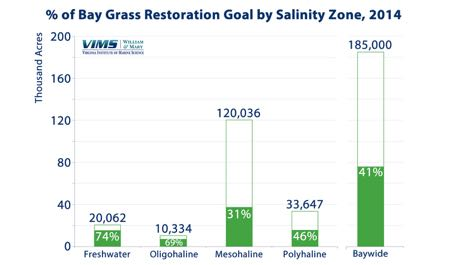 Bay Grass Restoration