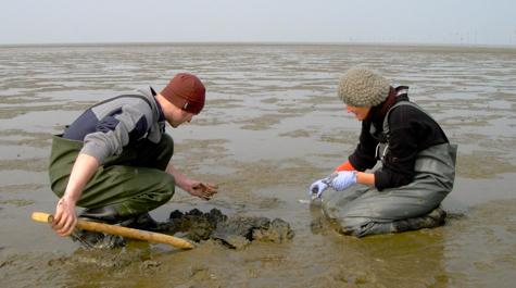 Marine invertebrates analysis