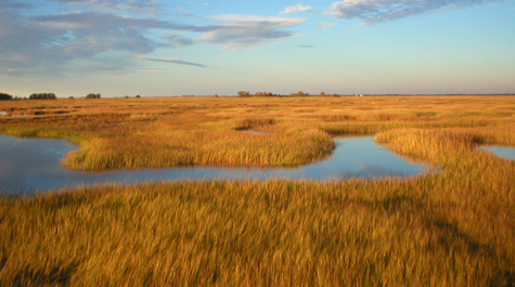 Chesapeake Marshes