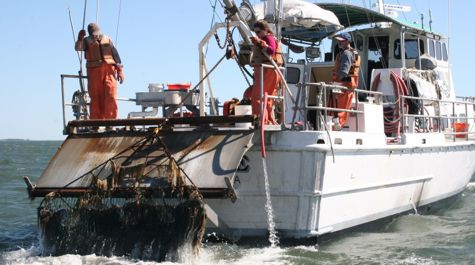 Blue Crab Winter Dredge Survey