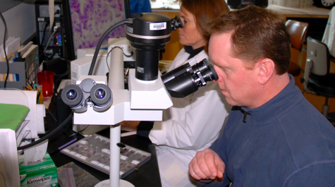 Ryan Carnegie and Rita Crockett examine oyster tissues under the microscope.