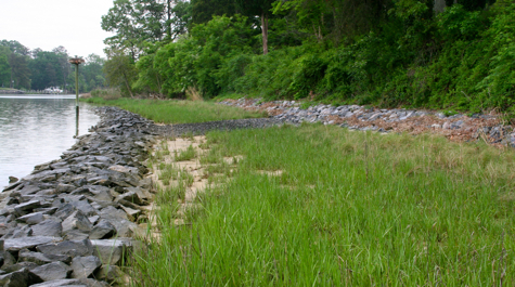 Living shorelines use strategic placement of plants, stone, sand, or other structural and organic materials to reduce erosion and enhance wetland habitat.