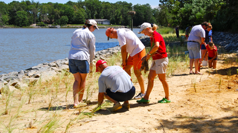 Volunteers plant marsh grass