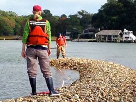 VIMS Ph.D. student Ann Arfken (foreground) measures an emergent oyster reef in the Lynnhaven River. © BK. Song/VIMS.