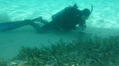 Healthy Seagrass Bed