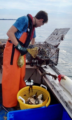 A researcher with Dominion's Millstone Environmental Laboratory monitors a lobster pot in Long Island Sound. © M. Groner/VIMS.