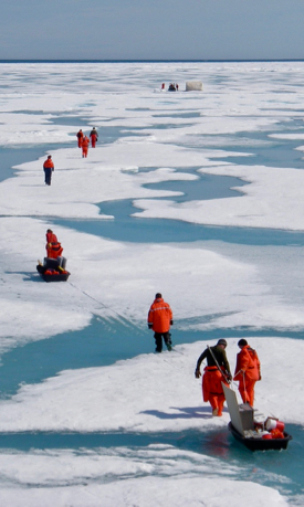A science team traverses Arctic sea ice during a previous research cruise. © E. Shadwick/VIMS.