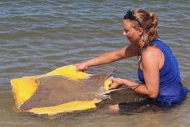 VIMS graduate student Kristene Parsons releases a tagged cownose ray. © R. Fisher/VIMS.
