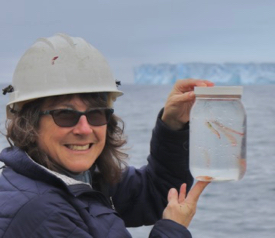 VIMS professor Deborah Steinberg with krill collected from the icy waters of the Southern Ocean. (WYDaily/© P. Thibodeau/VIMS.)