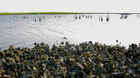 Exposed Oyster Reef