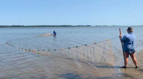 Seining for Juvenile Stripers
