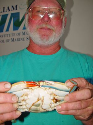 Waterman David Johnson of Deltaville pulled the crab from Chesapeake Bay.