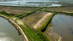 River-borne sediment helps the Sacramento-San Joaquin Delta retain its elevation, while organic matter provides food for wildlife.© California Dept. of Water Resources.