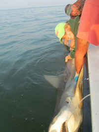 ESL intern Emilee Dize shark fishing on the Bay