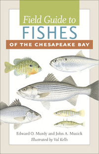 The cover of Field Guide to Fishes of the Chesapeake Bay. Image courtesy Johns Hopkins University Press.