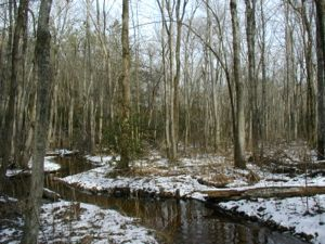 A forested headwater wetland in the Chesapeake Bay watershed.