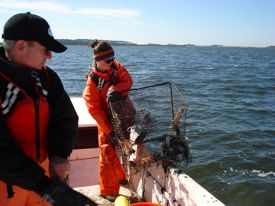 VIMS Professor Jeff Shields and graduate student Anna Coffey pull a crab pot. Photo by Dave Taylor, DFO Newfoundland.