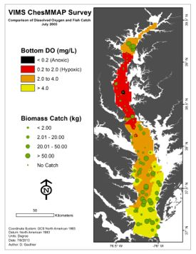 Data from VIMS' ChesMMAP survey illustrate the large dead zone that developed in Chesapeake Bay in the late summer of 2003. Dead zone in red in relation to fish catches (green circles). Click for larger version.