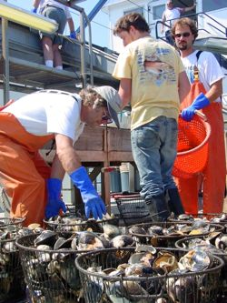 Dr. Roger Mann on the fishing vessel ESS Pursuit, during an assessment of surf-clam stocks in mid- Atlantic waters.