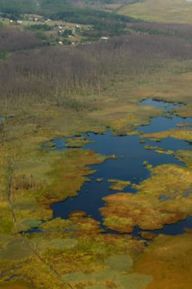 Many vegetated areas are converting to open water in Maryland's Blackwater National Wildlife Refuge. ©M. Kirwan/VIMS.