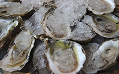 Oyster aquaculture is the important industry that raises oysters for human consumption.