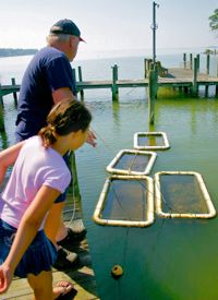 Oyster gardener and TOGA Vice President Brian Wood and his daughter Katie tend floats at their home in Reedville. Photo courtesy of The Rivah Visitor's Guide.