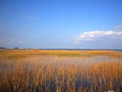 Low-elevation marshes are where dynamic feedbacks operate most effectively to counter sea-level rise. ©M. Kirwan.
