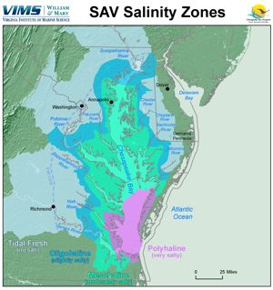 Monitoring of underwater bay grasses is now being reported by salinity zone, a more ecologically relevant scheme than one based on geography. Click for larger version.
