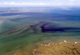 Variability in space and time is one thing that makes algal blooms difficult to study. © W. Vogelbein/VIMS.