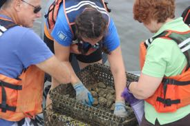 Wolf Vogelbein, Sarah Pease, and Kim Reece collect oysters to test for potential health impacts from a bloom.