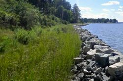 An existing living shoreline and sill helps protect a section of the Werowocomoco shoreline.