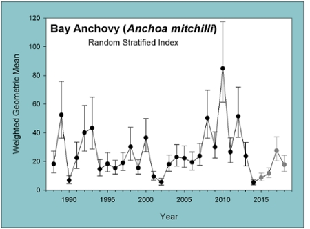 Bay Anchovy graph