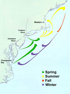 Map courtesy of the Massachusetts Division of Marine Fisheries.