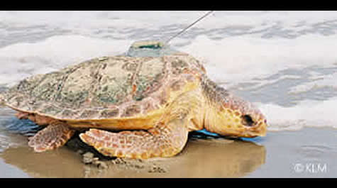 turtlerelease2003.jpg