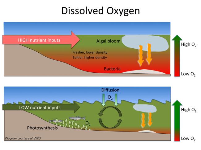Ocean Zones Diagram Column Find Wiring Diagram