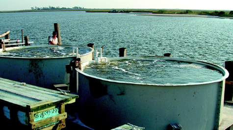 Oyster tanks
