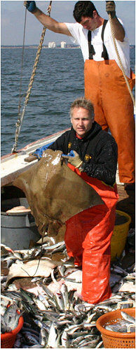 Robert Fisher holds a cownose ray on a pound-net boat out of Lynnhaven, VA. Rays can be a large component of by-catch in some fisheries, meaning they get inadvertently caught in nets targeting other fishes.